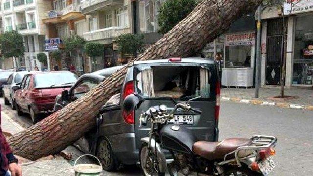 Külək 4 ağacı yerindən qopardı - Bakıda