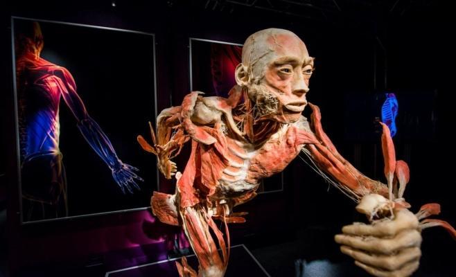 2018/01/anatomy_museum_1515909268_1515914526.jpg