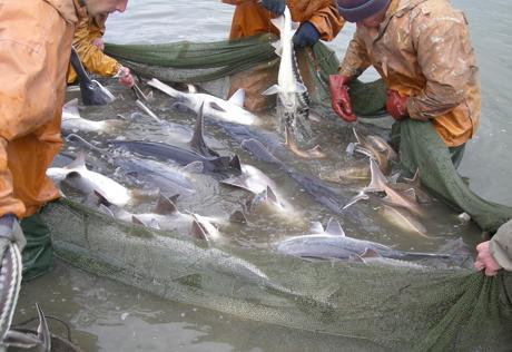 2021/04/fishing_231213_1618311238.jpg