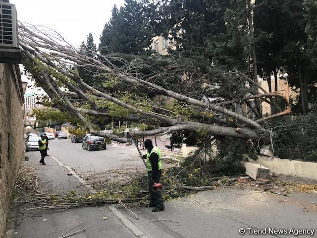 2021/04/trend_tree_agac_291118_4_1617716121.jpg
