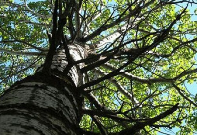 ağac.jpg